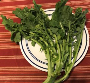 Rapini an Italian Vegetable